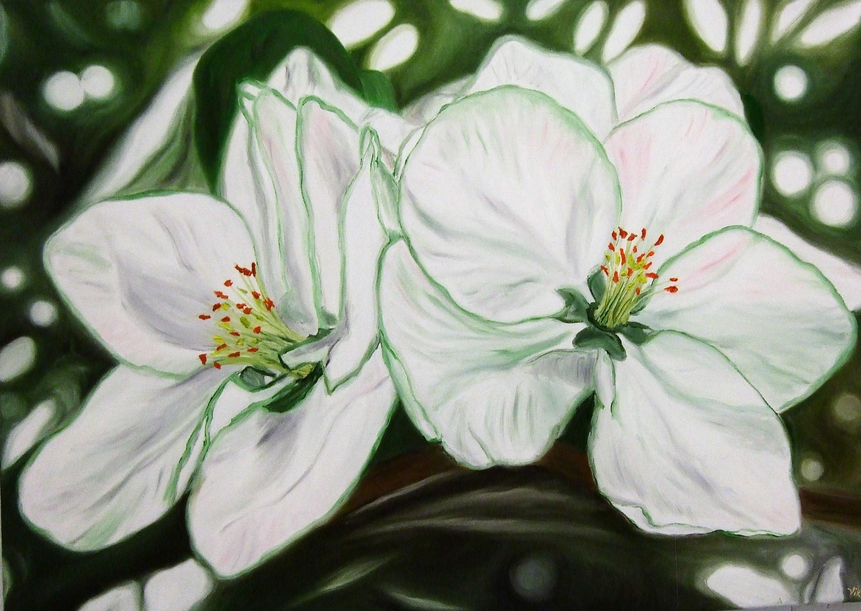 Apfelblüte III